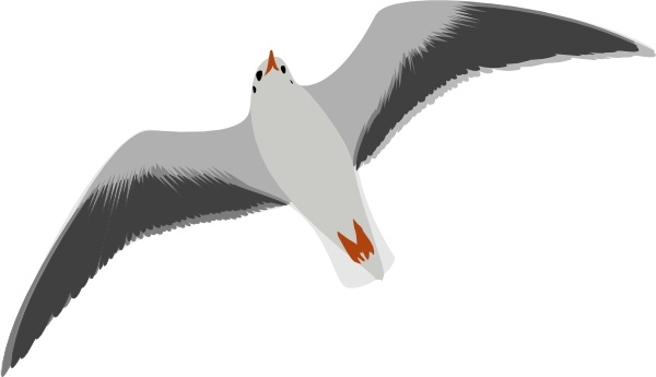 Sea Gull Seagull clip art Free vector in Open office drawing svg.