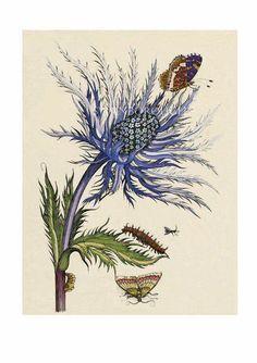 British Vintage Botanical Print.