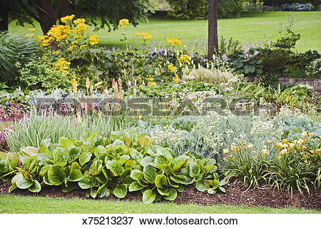 Picture of Perennial bed with bergenia , daylilies , ornamental.