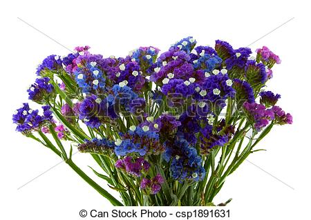 Stock Photography of Purple Blue Violet Statice Bouquet or Sea.