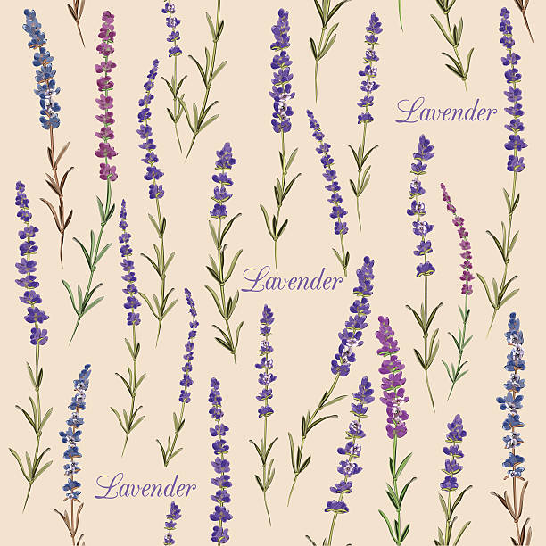 Sea Lavender Clip Art, Vector Images & Illustrations.