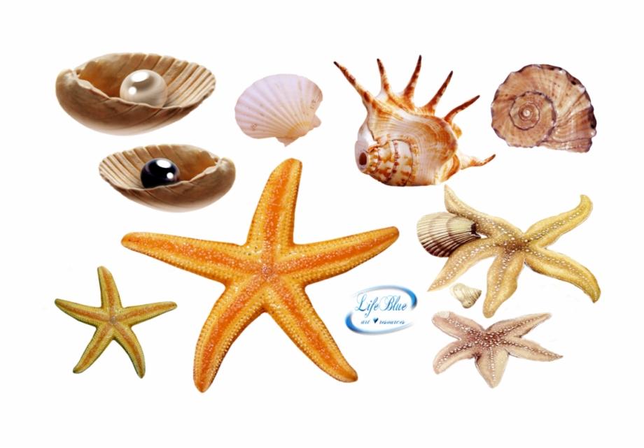 Sea Life Png.