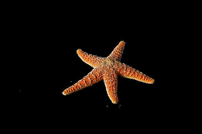 Sea Life Png Vector, Clipart, PSD.