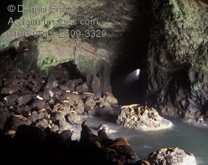 Stock Photography of Sea Lion Caves, Oregon.