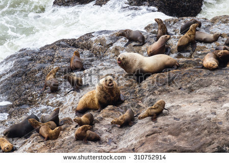 Lion Cave Stock Images, Royalty.