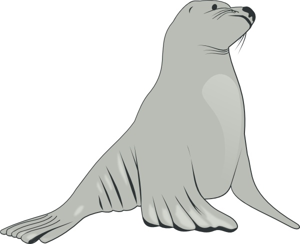 Sea Lion clip art Free vector in Open office drawing svg ( .svg.