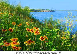 Sea flower Stock Photos and Images. 40,585 sea flower pictures and.