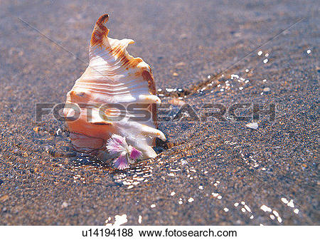 Pictures of sea shell, water, romantic, mood, beach, sand.