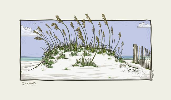 "Stunning ""Sea Oats"" Drawings And Illustrations For Sale On Fine."
