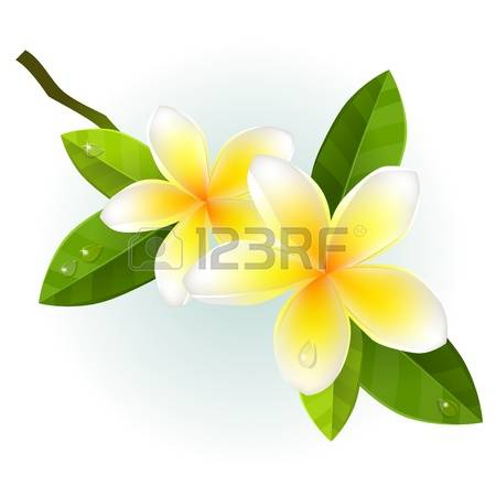 13,581 Sea Flower Stock Vector Illustration And Royalty Free Sea.