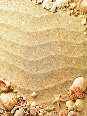 Sea Shells Sand Stock Photos, Images, & Pictures.