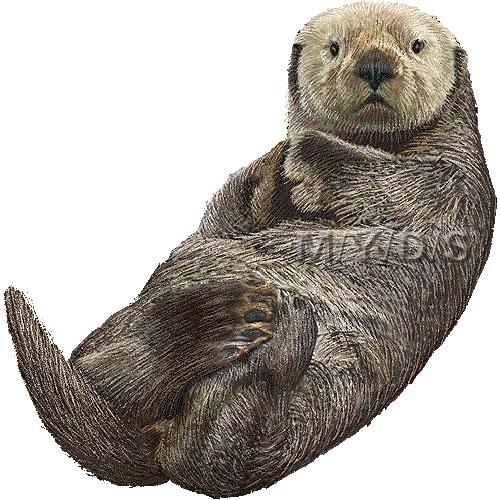Sea Otter Clipart.