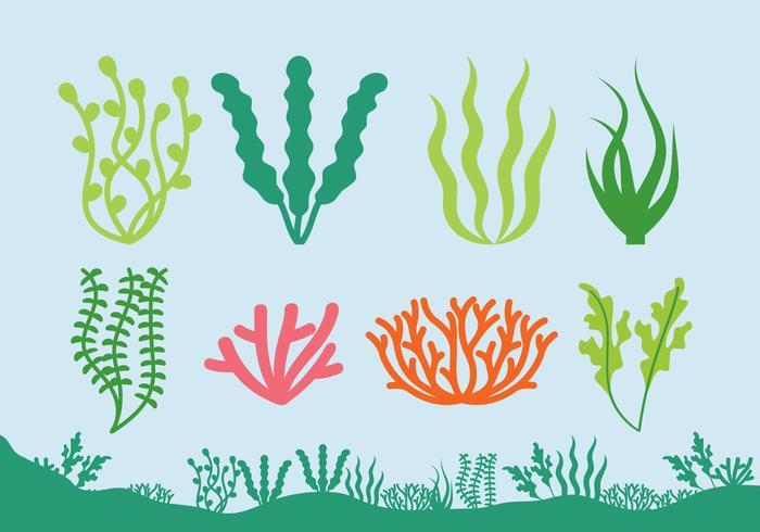 Sea Plants Free Vector Art.
