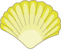 The shell clipart #13