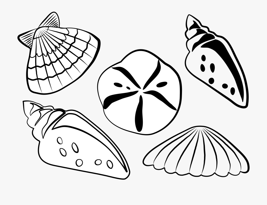 Sea Shells.