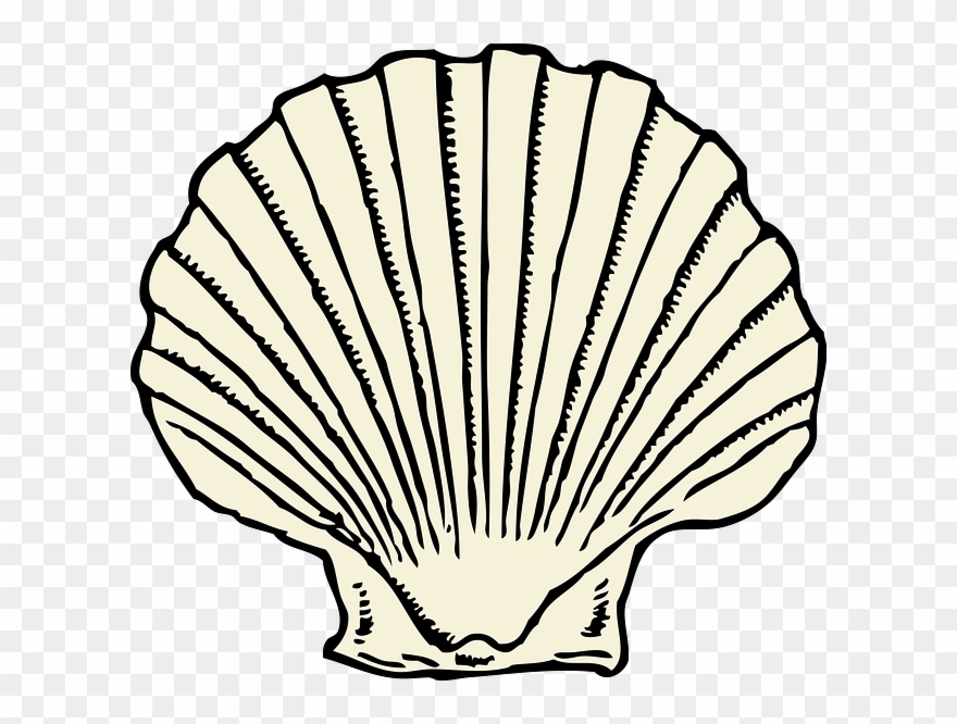 Graphic Black And White Stock Scallop Shell Outline.