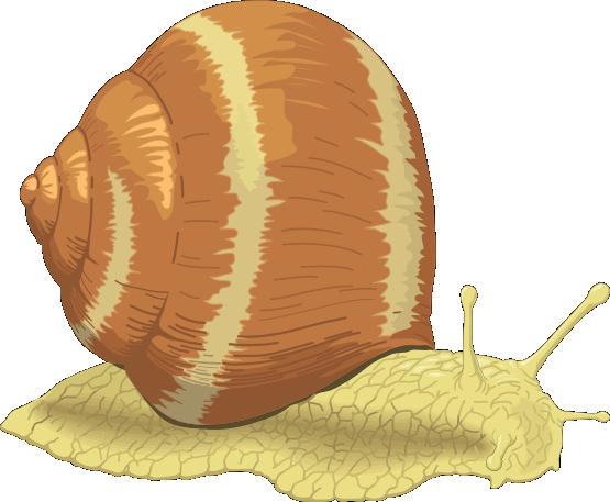 Sea snail clip art free clipart images 2.