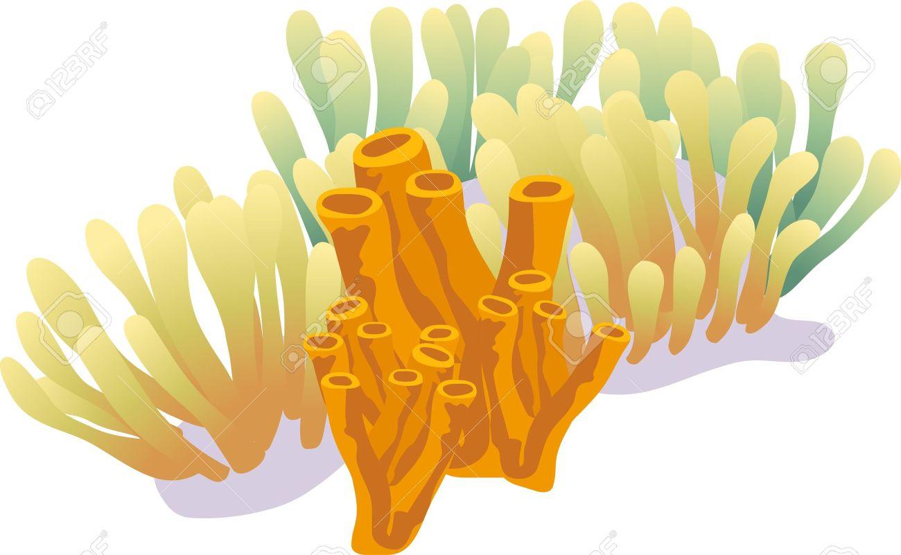 281 Sea Sponge Stock Vector Illustration And Royalty Free Sea.