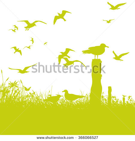 Sea Squab Stock Vectors & Vector Clip Art.