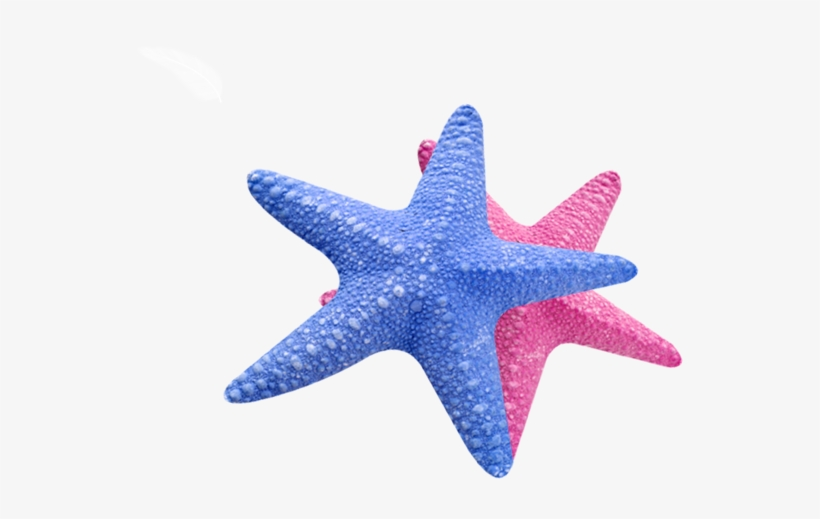 Sea Star Transparent.