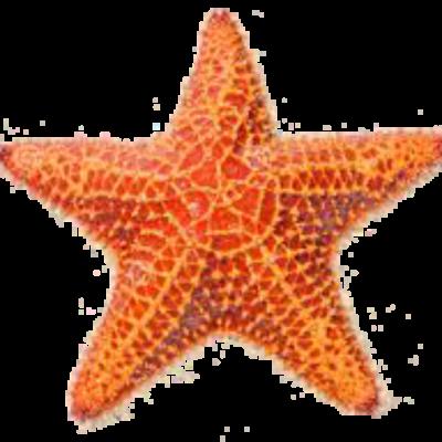 Seastar png.