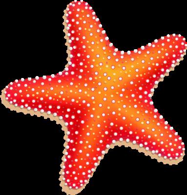 Orange Starfish.