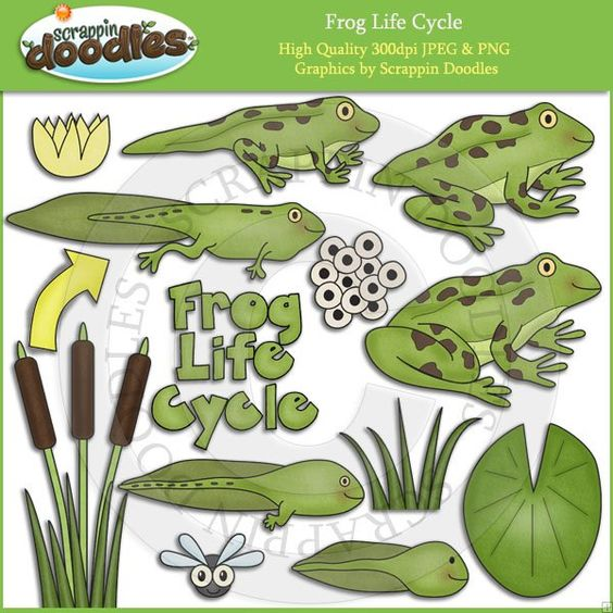 Frog Life Cycle Clip Art Download.
