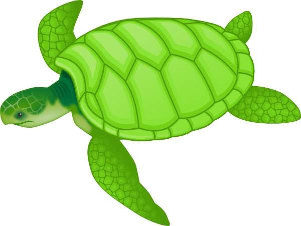 Sea turtle clipart 4.