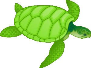 Green Sea Turtle clip art Free Vector / 4Vector.