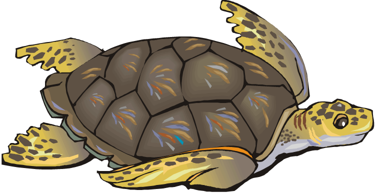 turtle clipart png #19