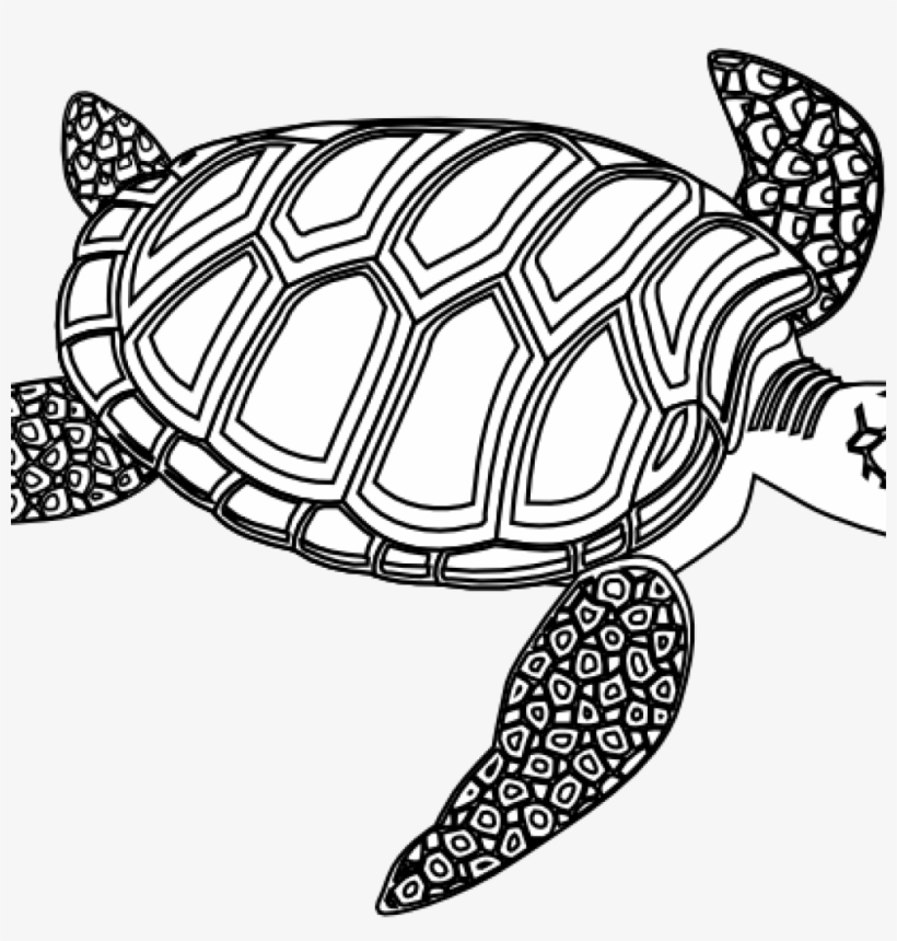 Sea Turtle Clipart Black And White Winter Clipart Hatenylo.