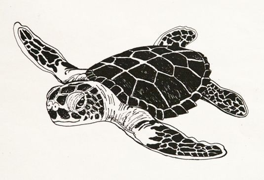 black and white turtle clip art.