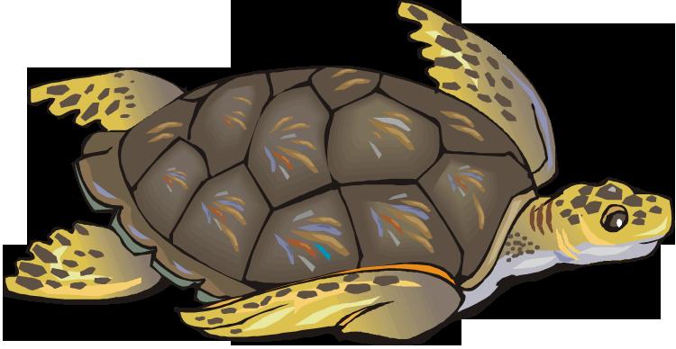 Sea turtle clip art free clipart images clipartix.