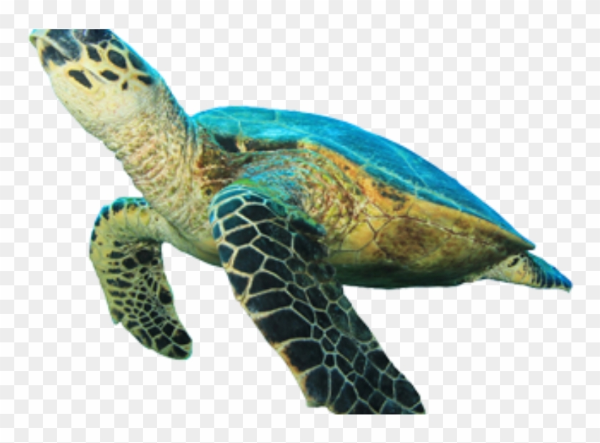 Sea Turtle Clipart Ocean Turtle.
