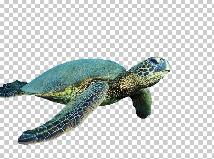 Sea Turtle Reptile Cropping PNG, Clipart, Animals, Cropping.