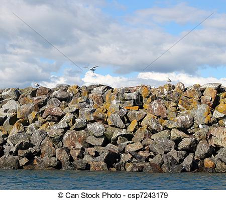 Stock Photographs of Gulls on the sea wall.