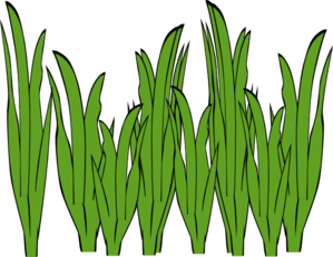 Free Seaweed Cliparts, Download Free Clip Art, Free Clip Art.