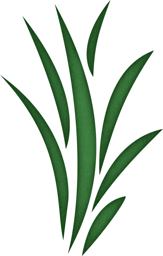 Seaweed grass clipart.