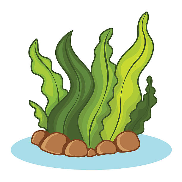 Seaweeds clipart 9 » Clipart Station.