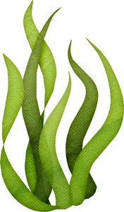 Sea Weeds Clipart.