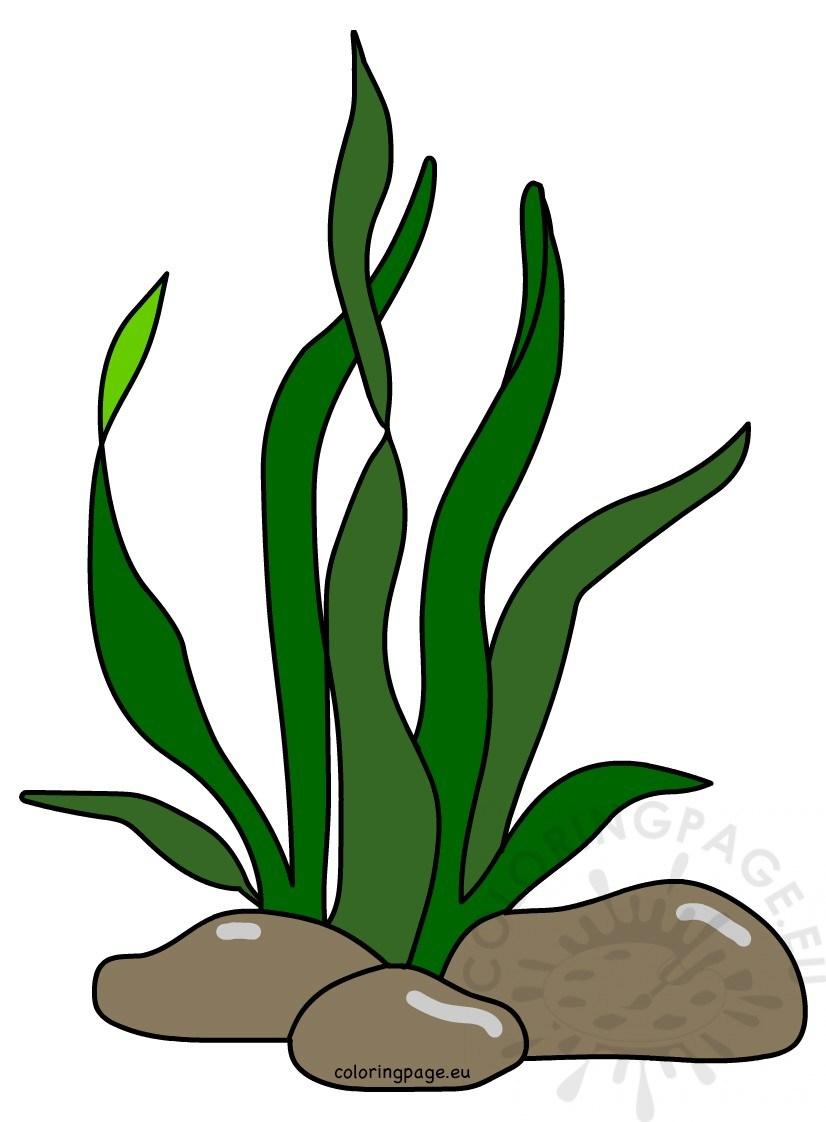 Seaweeds clipart 5 » Clipart Portal.