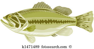 Sea bass Illustrations and Clip Art. 240 sea bass royalty free.