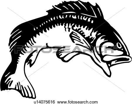 Sea bass Clip Art Vector Graphics. 843 sea bass EPS clipart vector.
