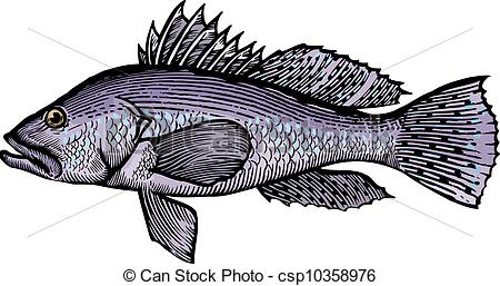 Stock Illustrations of A drawing of a sea bass csp10358976.