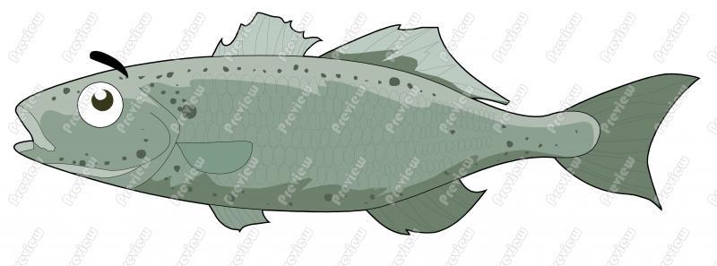 Sea Bass Clip Art.