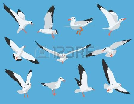 18,768 Sea Bird Stock Illustrations, Cliparts And Royalty Free Sea.