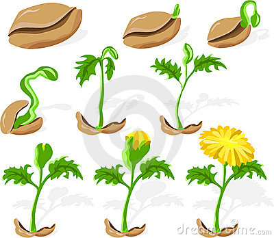 Seeds was clipart - Clipground