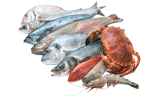 Seafood Collection transparent PNG.