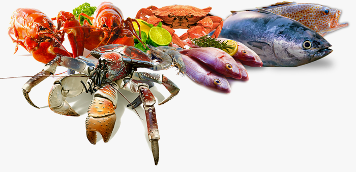Fish,Seafood,Fish products,Food,Fish,Cuisine #4233374.
