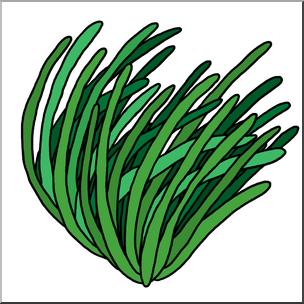 Clip Art: Plants: Seagrass Color 2 I abcteach.com.